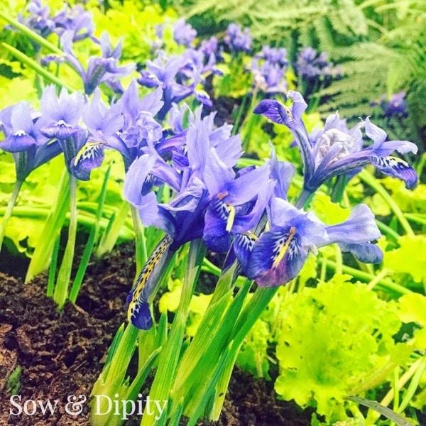 plants for balancing the throat chakra