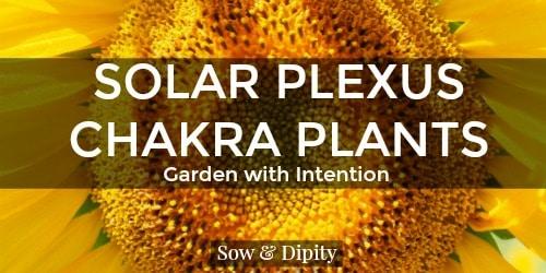 Plants to Balance the Solar Plexus Chakra