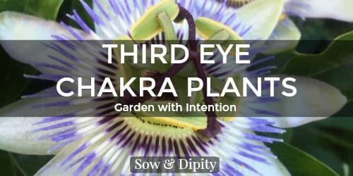 Third eye chakra plants