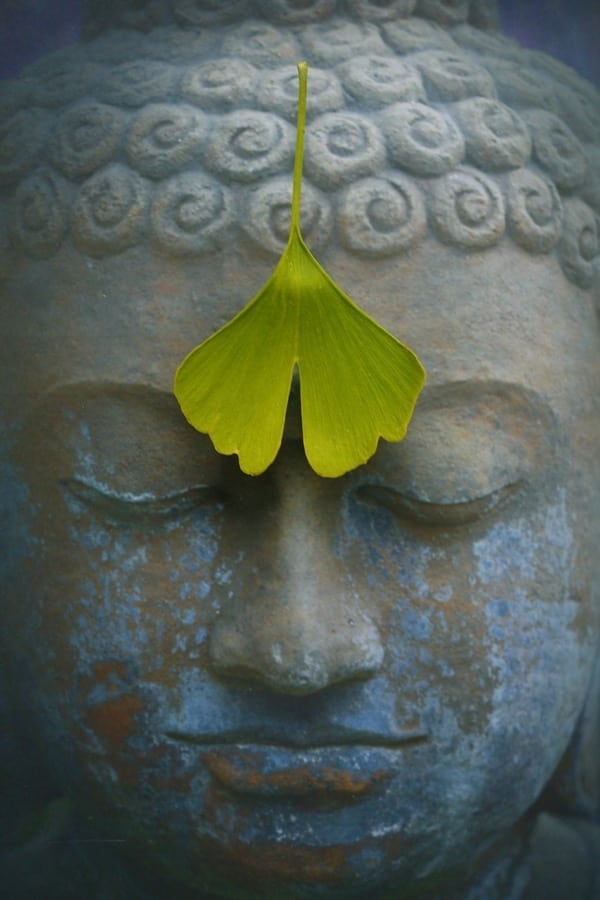 Try placing a leaf over your third eye chakra when meditating