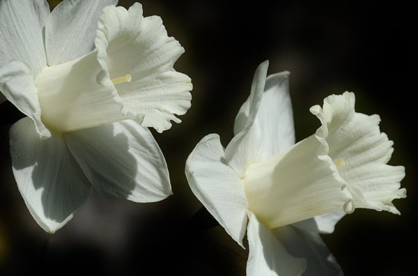 Crown chakra plants