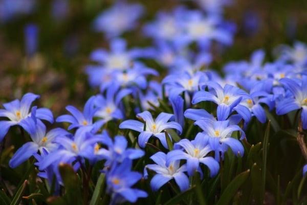 Blue plants that help the Throat chakra