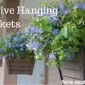 Revive Hanging Baskets